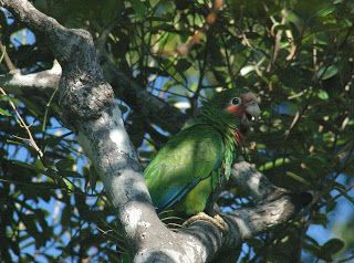 Parrots, Paddling, and Ponderings: Wildlife vacations: it's tough to pick a top 5 - what are yours?