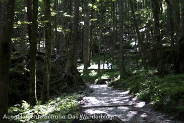 Bäume, die auf riesigen Findlingen wachsen. http://ausgelatschte-schuhe.de/watzmann-eiskapelle/