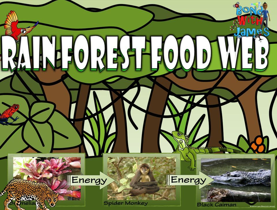 Food Chain and Food Web: Rainforest Card Sort | Biology, Food ...