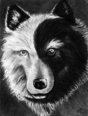 Épinglé par TaIia Jorge sur Wolves | Pinterest