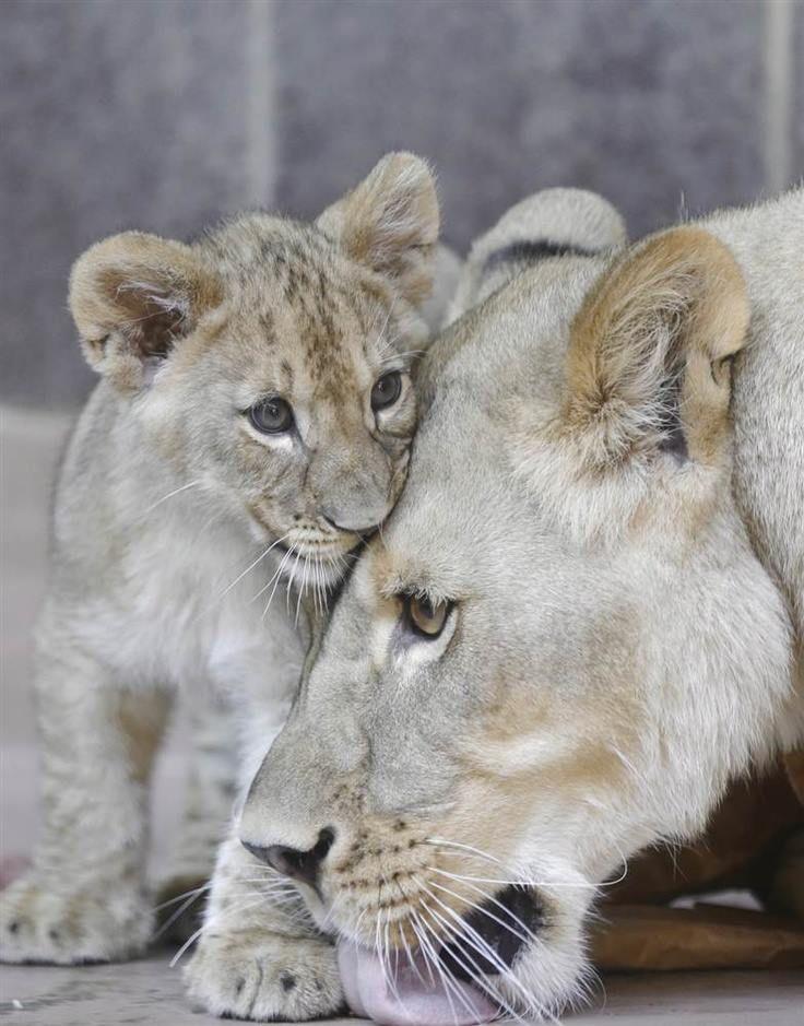 Photo: Nati Harnik / AP via Animal Tracks