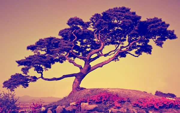 Japanese Tree Wallpaper Bosque Bonsais Y Naturaleza