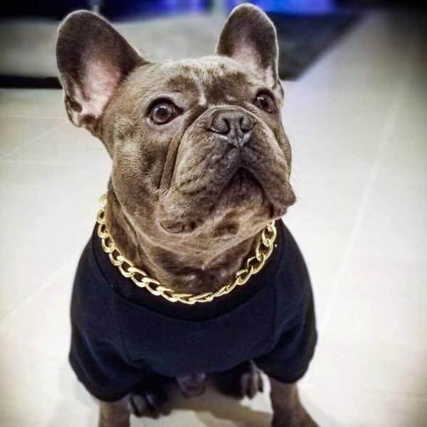Cuban Link 20mm Dog Gold Chain French Bulldog Dog Bulldog