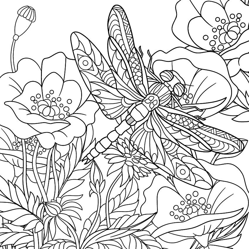 Dragonfly Coloring Page Templates Patterns Pinterest