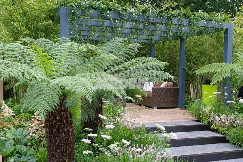 douceur exotique tout petit jardin ambiance tropicale les plus beaux jardins la. Black Bedroom Furniture Sets. Home Design Ideas