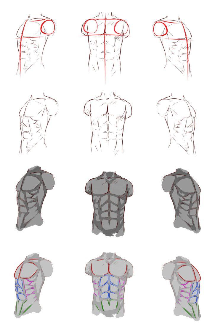 Male anatomy by ryky   body parts - anime   Pinterest   Anatomy ...
