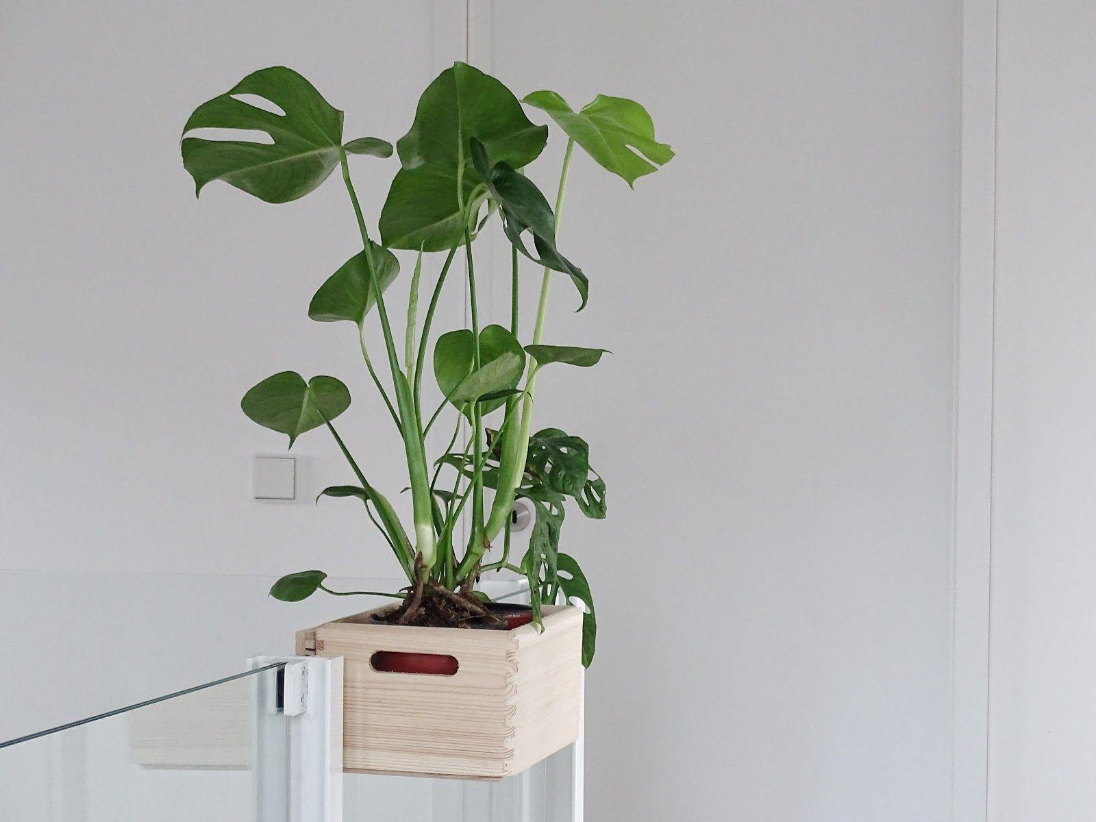 Diy Blumenkasten Aus Holz Zum Aufhängen An Treppengeländern Und Galerien