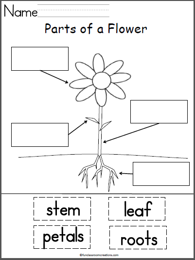Students Label The Parts Of A Flower With This Free Cut