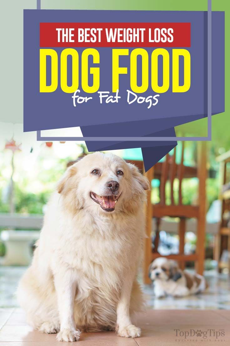 The Best Weight Loss Dog Food For Fat Dogs Animals Pinterest