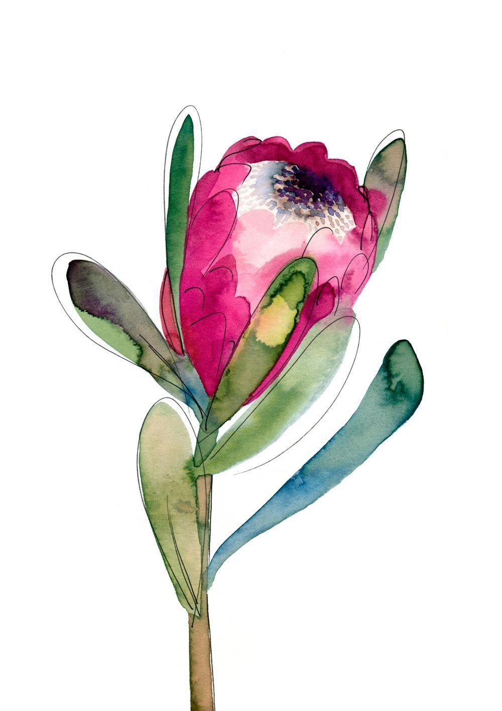 Untitled (Protea)   Watercolor   Watercolor art, Art ...