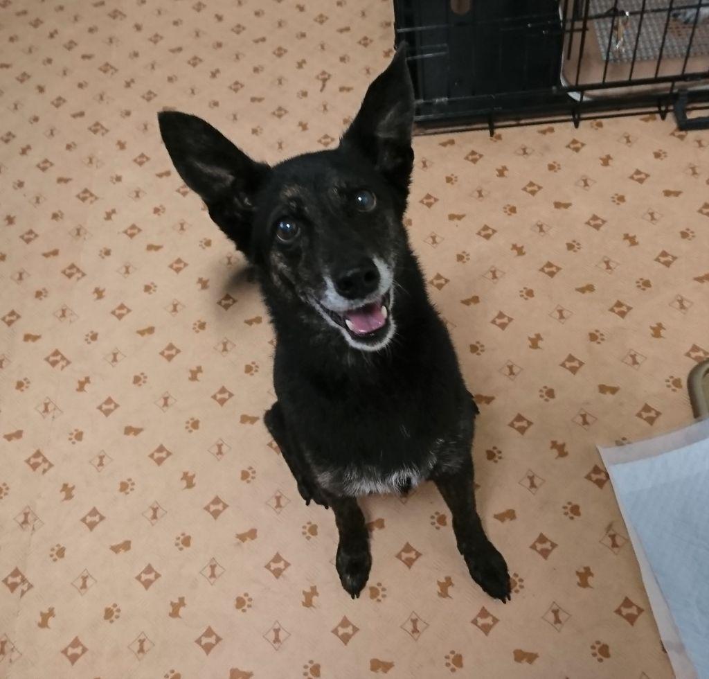 犬の里親募集情報 Omusubi 審査制の保護犬猫マッチングサイト 里親 犬 猫