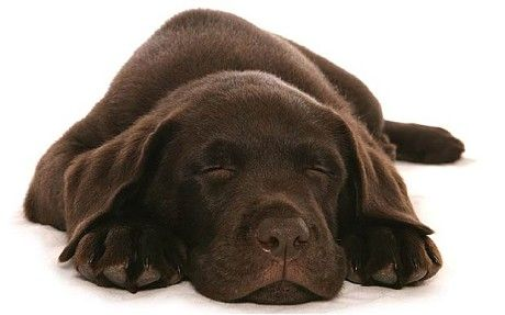 Pet Passport Rules To Be Relaxed Sleeping Dogs Animal Behavior