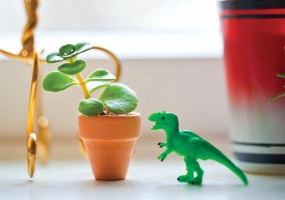 Informationaboutplants Information About Plants Pinterest