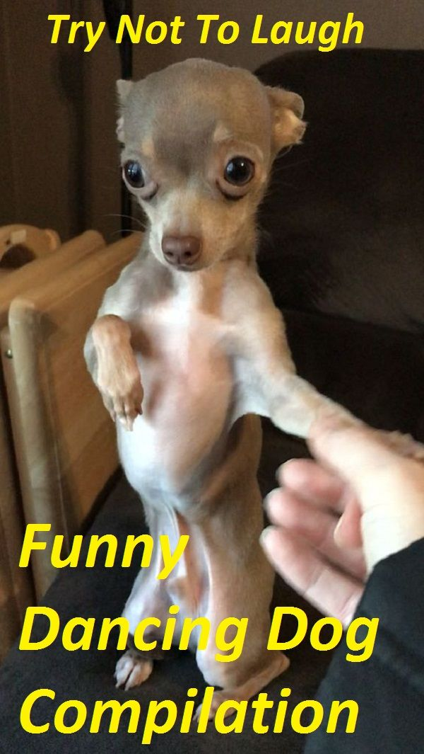 Dog Dancing Funny Cute Stuff Dogs Animals Dog Spaces