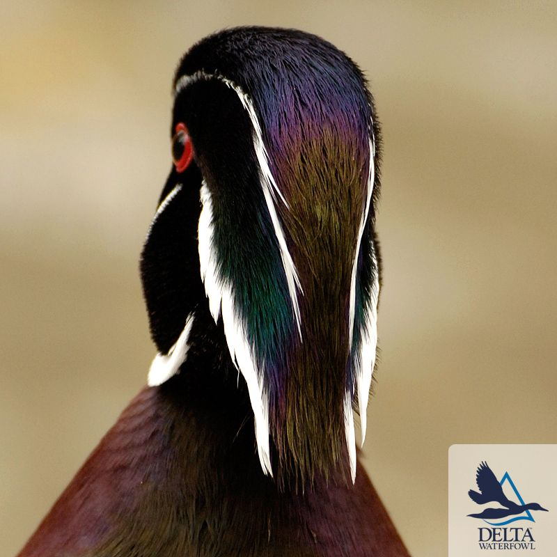 Wood Duck in Tree Wall Sculpture by Phil Galatas