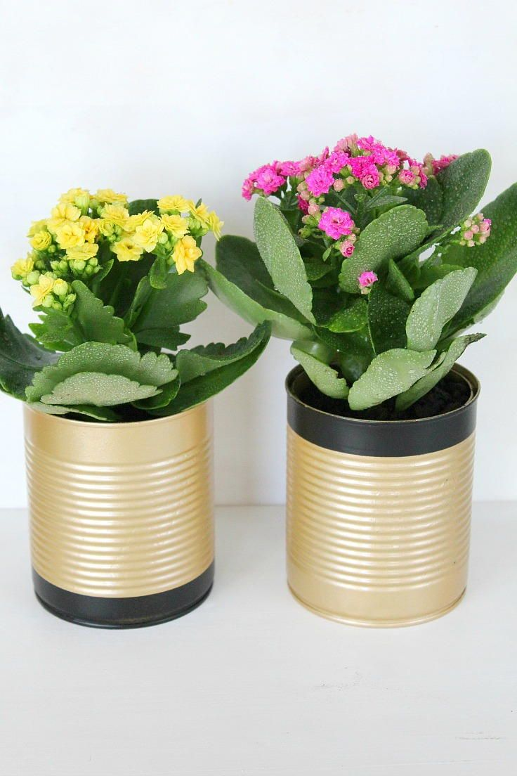 Fancy Tin Can Flower Pots Tin Can Flowers Diy Flower Pots Recycled Tin Cans