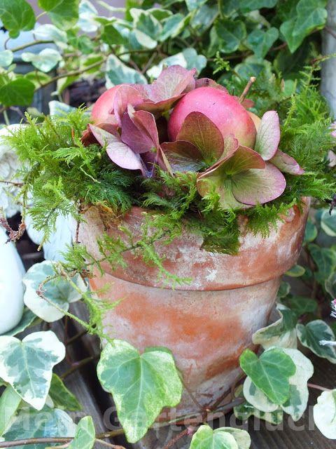 Mein Gartenglück: Wenn es Herbst wird