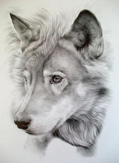 Pencil drawing by Jayden Parker.