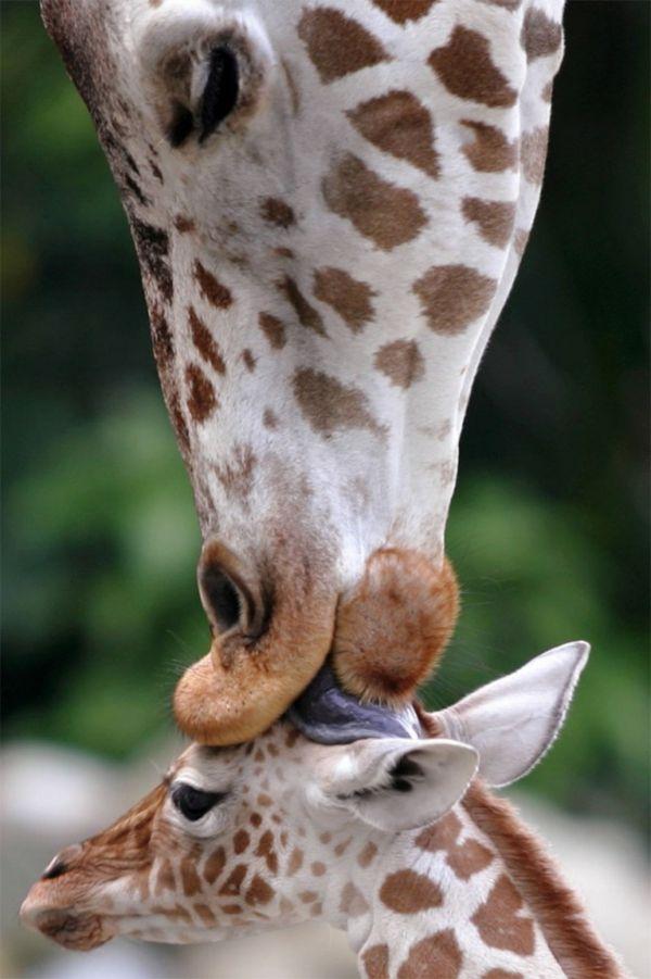 Lustige Tiere - 19 stimmungsvolle Fotos für echte Tierliebhaber #cuteanimalphotos