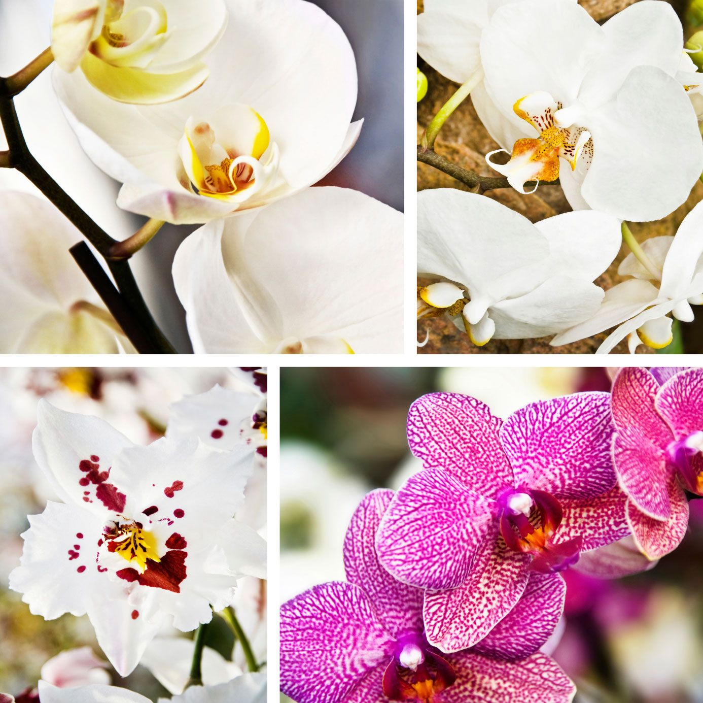 Indoor orchid plant types u different varieties of orchid flowers