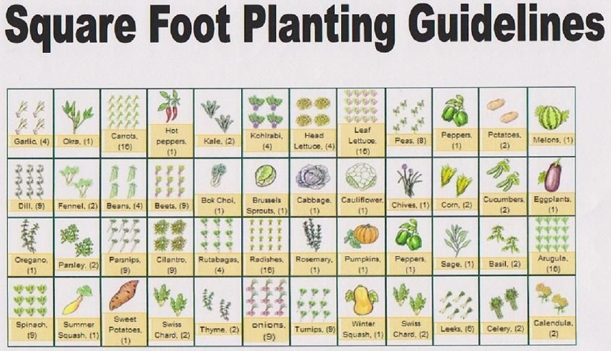 Companion Planting Chart Yahoo Search Results Square Foot Gardening Plans Garden Layout Vegetable Square Foot Gardening Layout