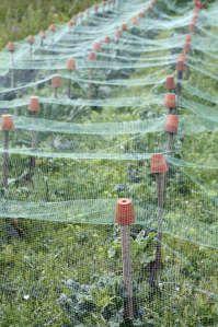 Garden Netting Garden Netting