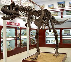 Pin By Christopher Grall On C F In 2020 Dinosaur Exhibition