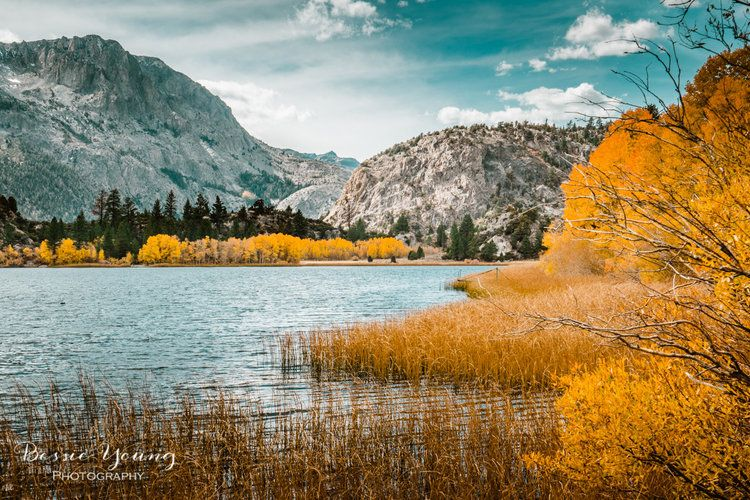 Fall Landscape Photography June Lake California Why Have I Never Shared These Bessie Young Photography Fall Landscape Photography Landscape Photography Nature Autumn Landscape