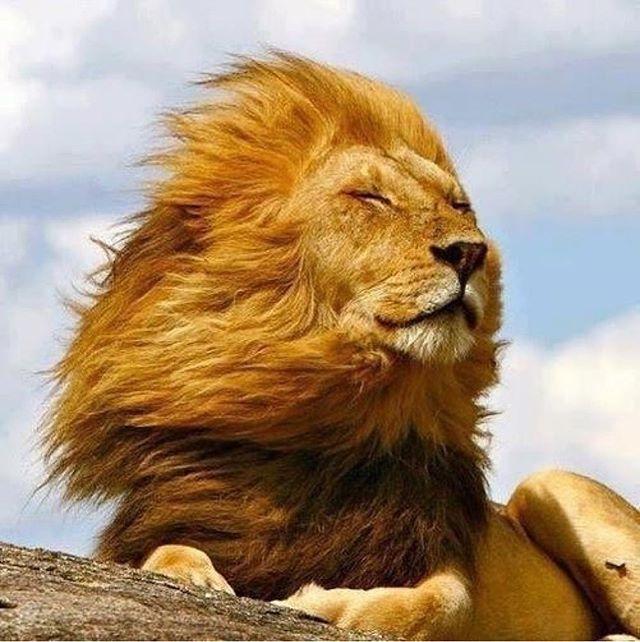 Instagram Photo, Video, Slideshow and Bulk Downloader | Animals