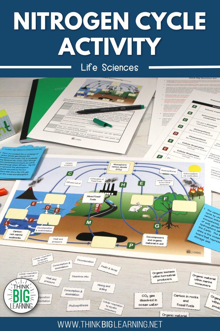 Nitrogen Cycle Interactive Diagram Activity With Task Cards
