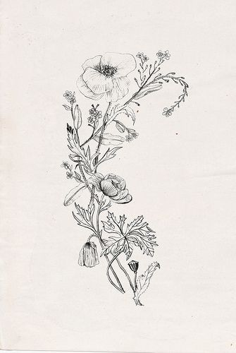 Lovely: wildflowers with poppy (tattoo design commission) | Nadezda Fava via Fli...