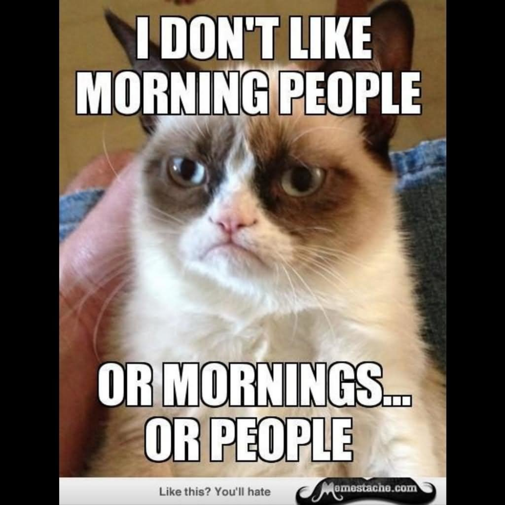 30 Very Funny Grumpy Cat Meme Pictures And Photos lol