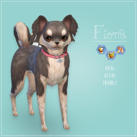 Chihuahua Sims Pets Sims 4 Pets Sims 4
