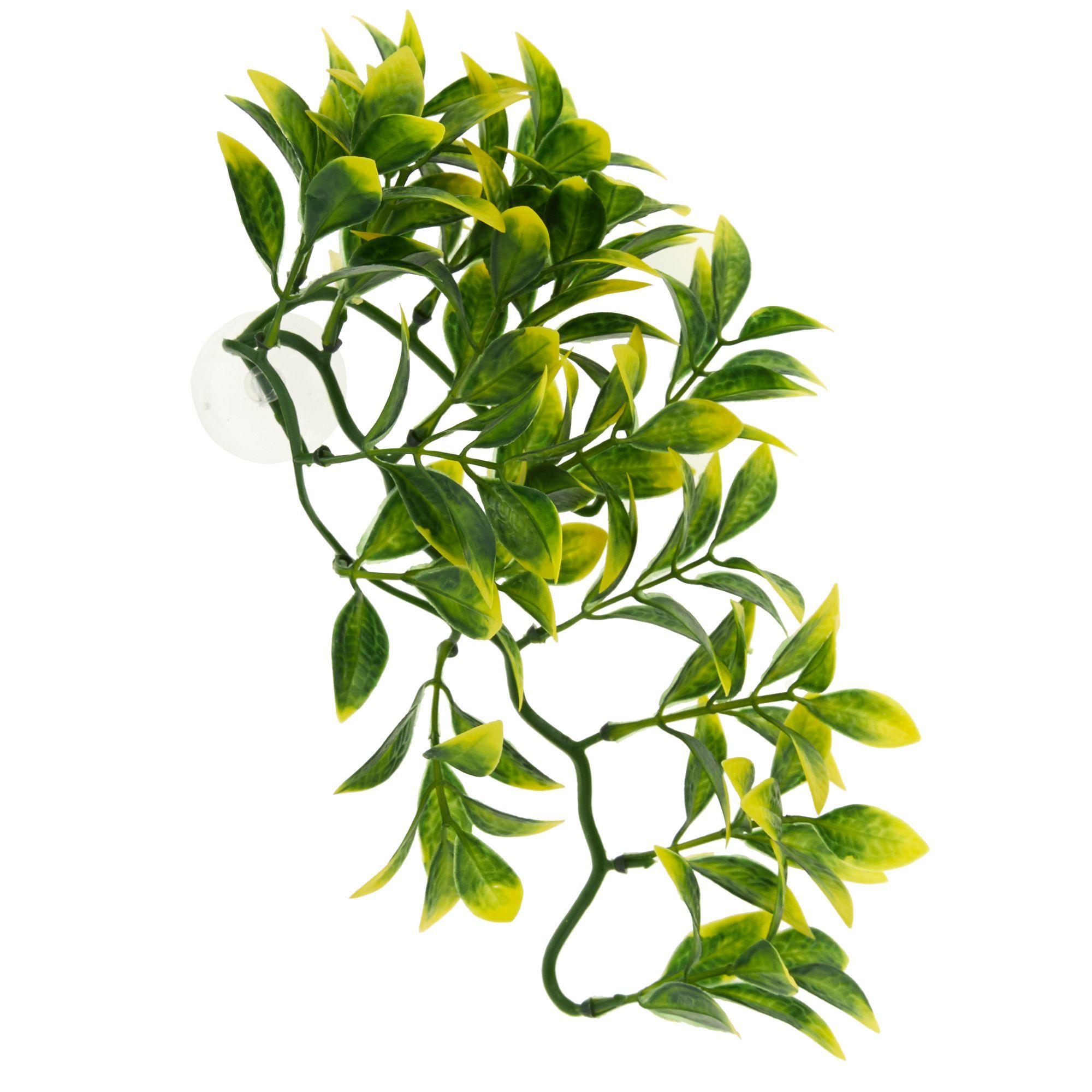 Thrive Medium Hanging Terrarium Plant Size Medium Hanging