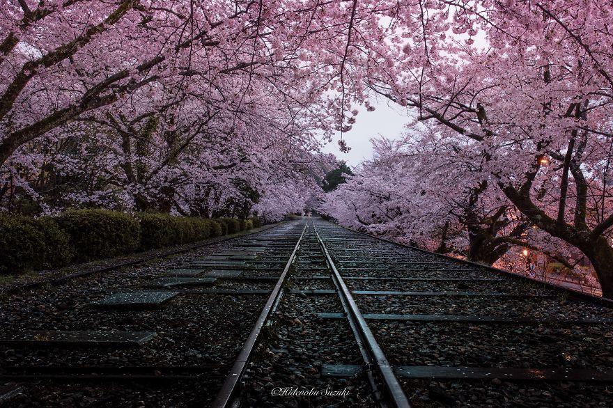 I Captured Sakura Bloom In Japan | Bored Panda