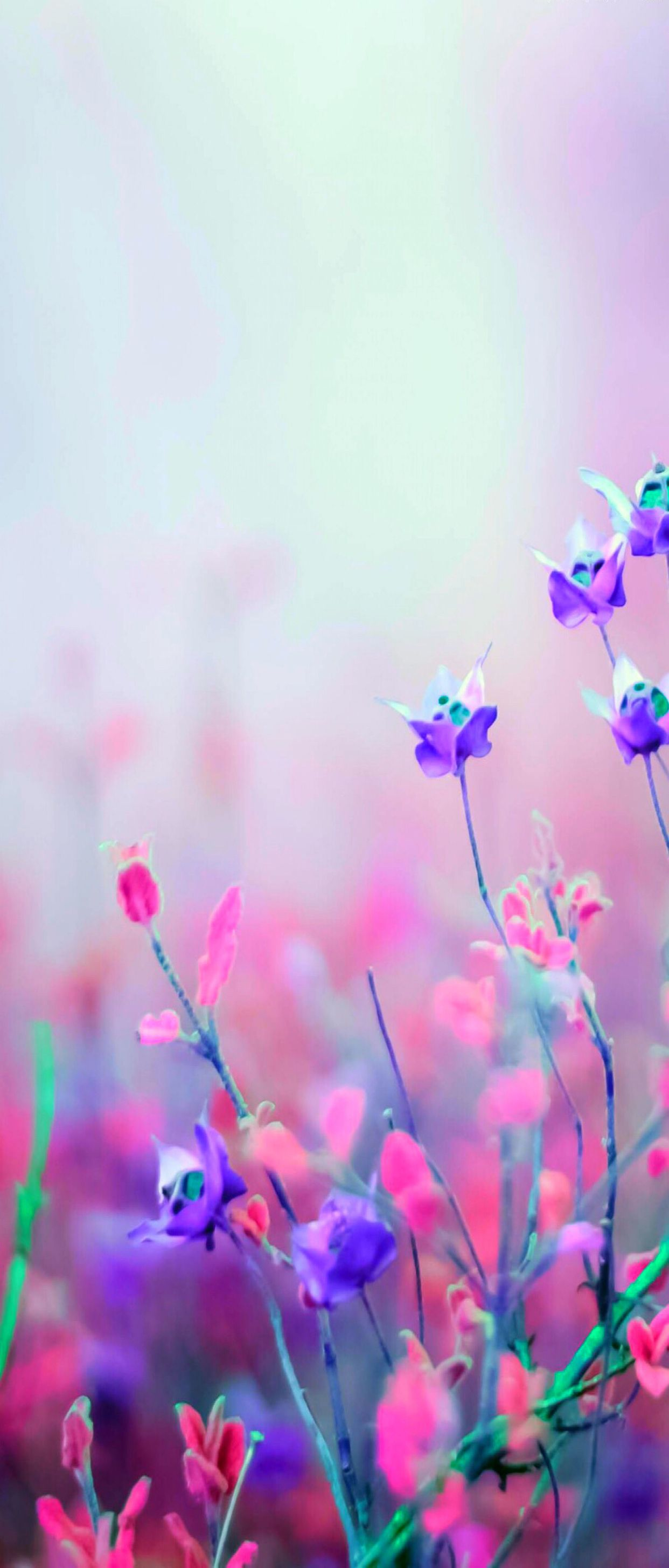 Floral Silver Pink Nature Violet Wallpaper Pattern Galaxy Colour Abstract Digital Art Purple Flowers Wallpaper Free Flower Wallpaper Flower Wallpaper