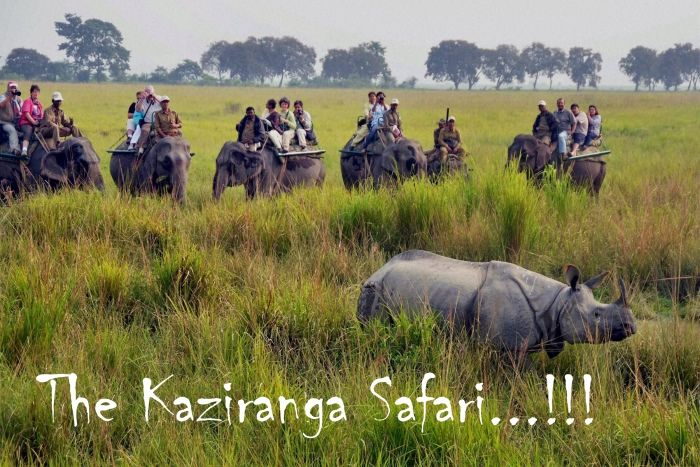 The Kaziranga Safari...!!! Kaziranga National Park, a World Heritage Site, is one of the most famous wildlife Safari destinations in India. Located in Assam it is known for its wildlife diversity and is home to the One Horned Rhino, Elephants, Wild Buffalos, Deers, Tigers and many other exotic animals. #India #Holidays #Tourism #Homestays # Kaziranga #NationalPark  #WorldHeritageSite #Safari #Assam #Rhino #Tiger #Wildlife #Deer #Elephant