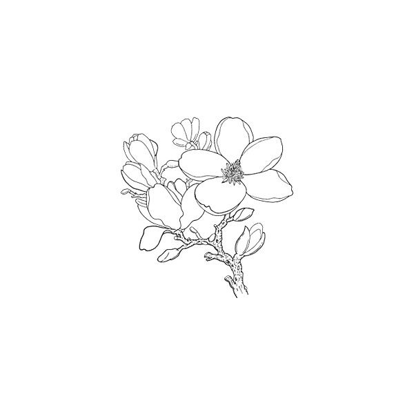 Liked On Polyvore Featuring Fillers Flowers Backgrounds Drawings Doodles Text Quotes Embellishm Simple Line Drawings Creative Tattoos Botanical Tattoo