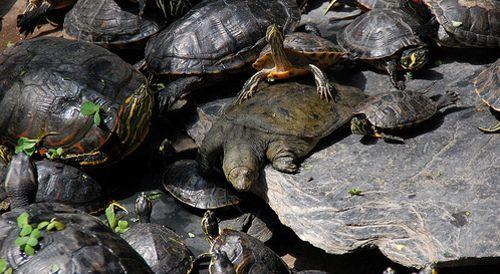 Las tortugas de Atocha, un 'símbolo' problemático