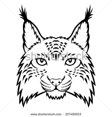 Bobcat Face Diagram