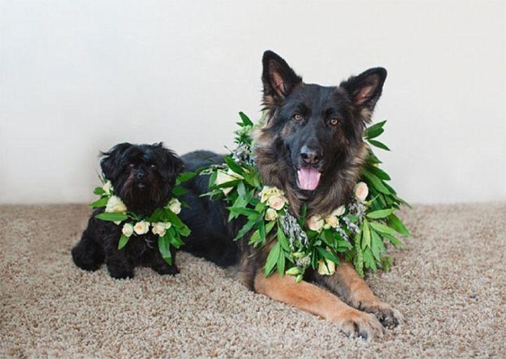 Flower Crowns and Collars Doggie Style - Mon Cheri Bridals
