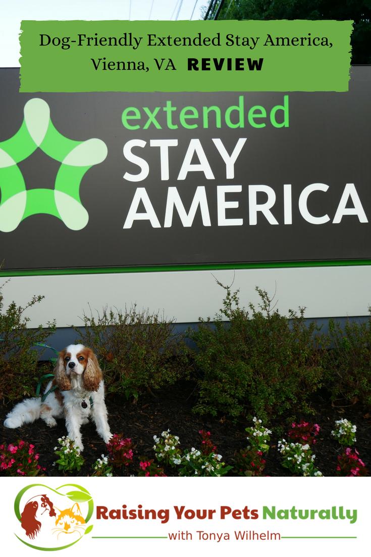 Pet Friendly Hotels In Washington Dc Area Vienna Virginia Dog