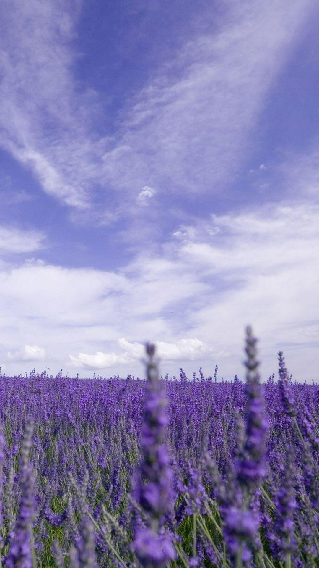 Nature Purple Lavender Garden iPhone 6 wallpaper