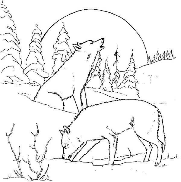 Wolf Wolf Couple At Night Coloring Page Wolf Colors Zebra