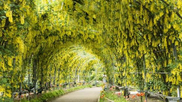 22 Magical Destinations To Visit In Your Lifetime Wisteria Planting Flowers Ashikaga