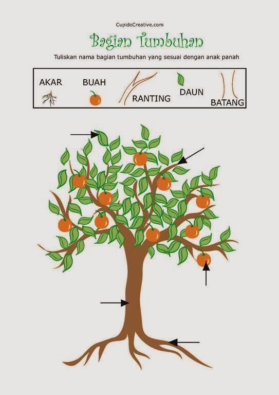 Belajar Nama Bagian Tumbuhan Untuk Anak Tk Belajar Menulis