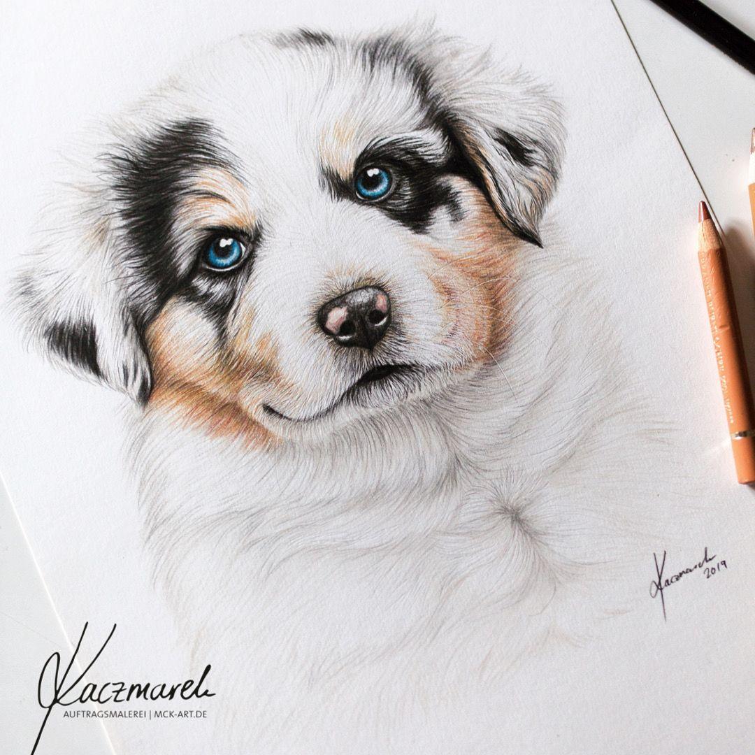 Handgemalte Pastell Zeichnung Von Australian Shepherd Welpen Www Mck Art De Australian Shepherd Welpen Hande Malen Zeichnungen