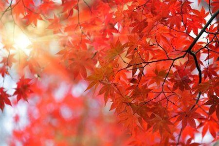 japanse bomen - Google zoeken
