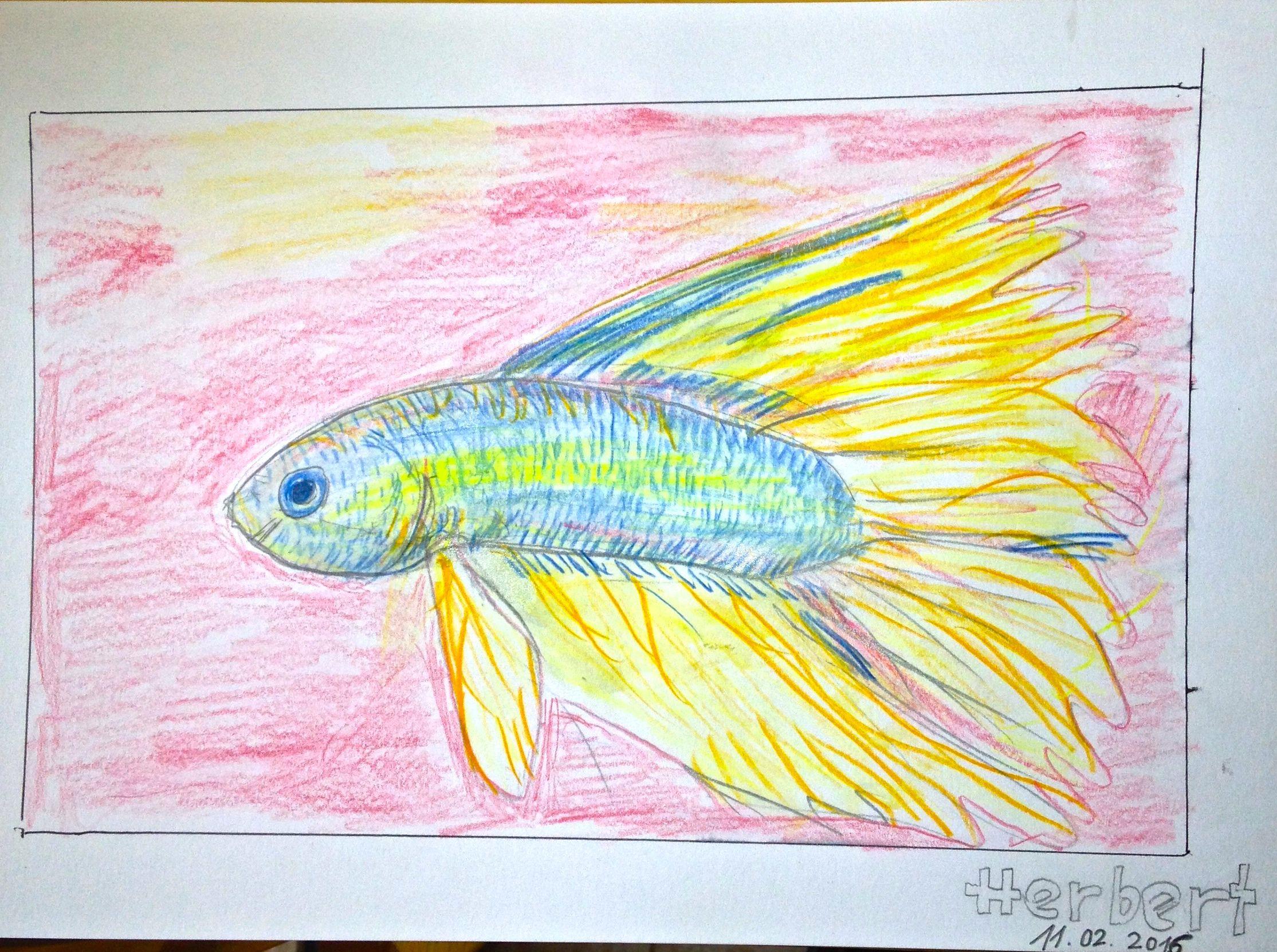 Kampffisch Aquarellstifte Herbert Aquarellstift Aquarell Stifte Kunstprojekte