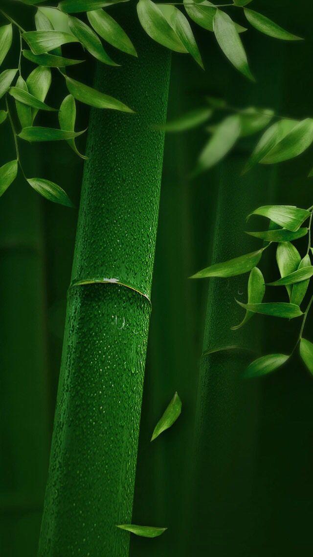 Bamboo Wallpaper Hd : bamboo, wallpaper, Nature, Wallpaper, IPhone, Wallpaper,, Green